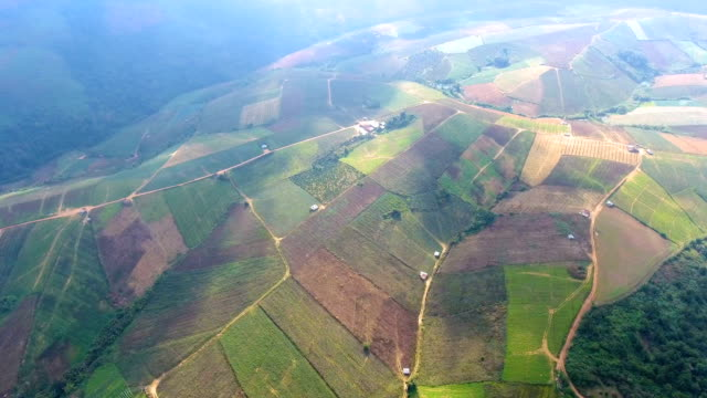 Agricultural Farm on Mountain with Beautiful Sunlight, Aerial Video