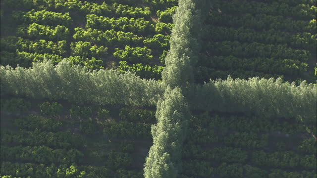 aerial zo agricultural grid patterns, stellenbosch, western cape, south africa - stellenbosch stock videos and b-roll footage
