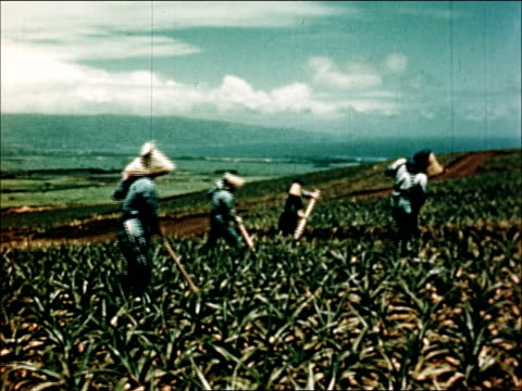 1950 Agricultural industries of Hawaii