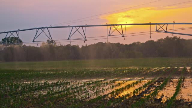 sistema di irrigazione agricoli al tramonto - attrezzatura per l'irrigazione video stock e b–roll