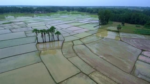 agricultural land aerial view - rice paddy stock videos and b-roll footage