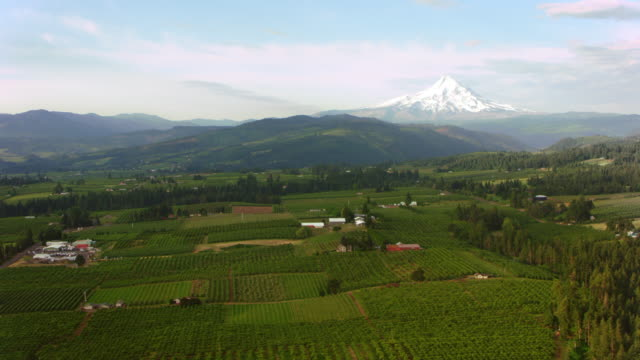aerial agricultural land with mt. hood in the background - mt hood stock videos & royalty-free footage