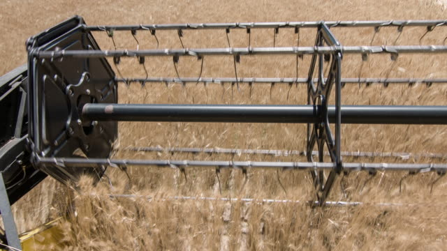 agricultural machinery, combine harvester - combine harvester stock videos & royalty-free footage