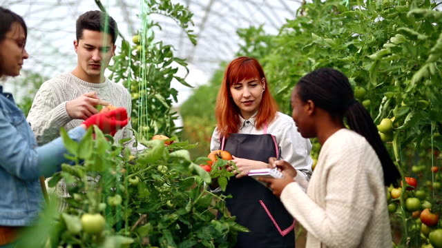 Agricultural researches and gardeningGroup of farmers doing researches in greenhouse