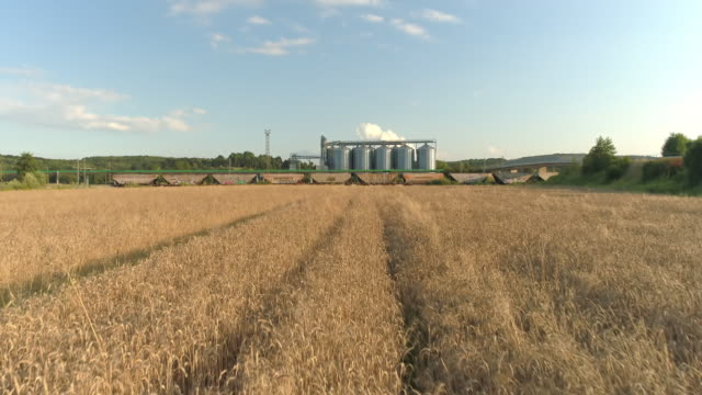 ws agricultural silos behind sunny,rural wheat field,slovenia - deposito video stock e b–roll