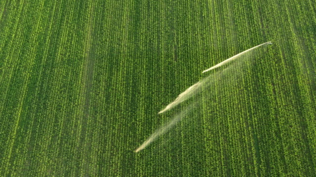 aerial agricultural sprinkler spraying a corn field - sprinkler system stock videos & royalty-free footage