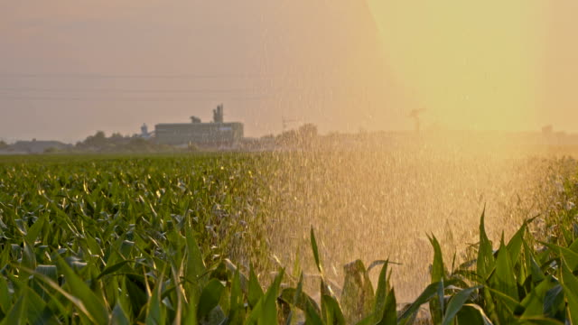 SLO MO Agricultural sprinkler spraying a cornfield
