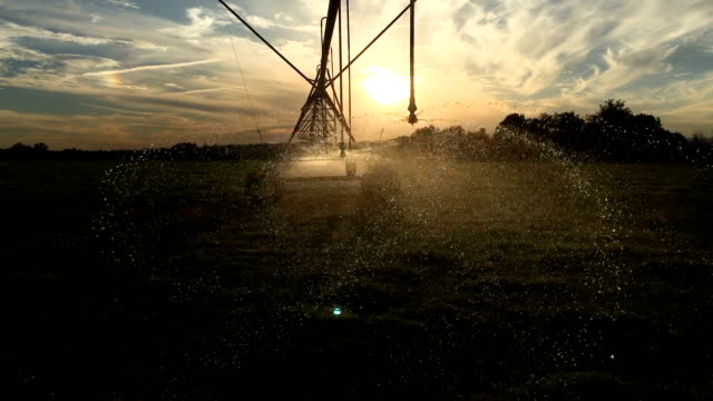 agricultural sprinkler watering grass - irrigation equipment stock videos & royalty-free footage