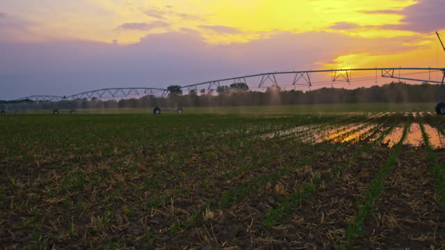 DS Agricultural sprinklers watering a field at sunset