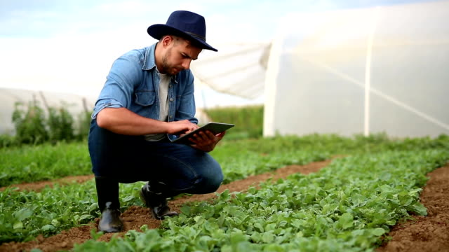 Agricultural technician  in a spinach field