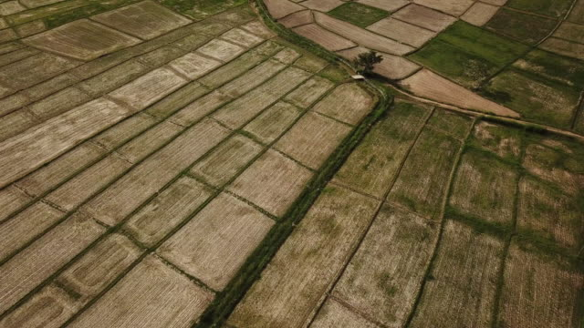 agricultural tractor plowing field agriculture rice field terrace wheat field during a summer dry season , aerial view - revolution stock videos & royalty-free footage