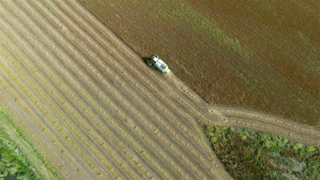 agriculture aerial - harvesting soybeans - soya bean stock videos & royalty-free footage