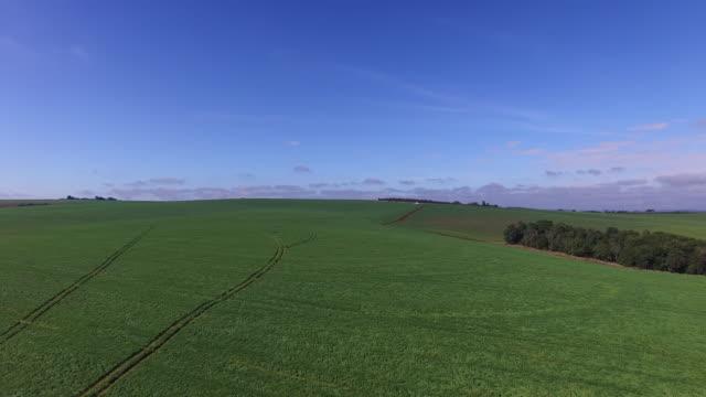 agriculture aerial - soybean field - soybean bildbanksvideor och videomaterial från bakom kulisserna