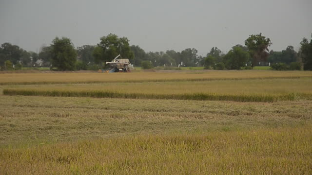 agriculture and harvester in thailand