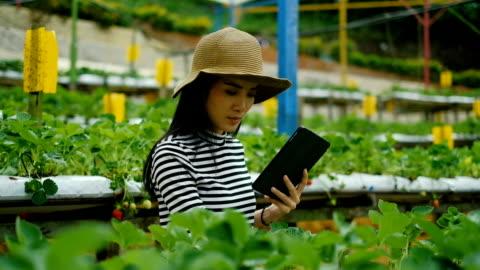 vidéos et rushes de l'agriculture: asiatique femme agriculteur avec a digital tablet in the field, concept de l'agriculture et de la technologie smart - culture hydroponique