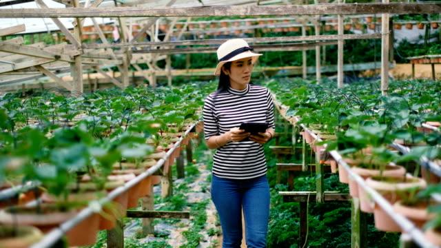 vídeos y material grabado en eventos de stock de agricultura: asiáticas mujer con a digital tablet en el campo, elegante concepto de agricultura y tecnología - hidropónica