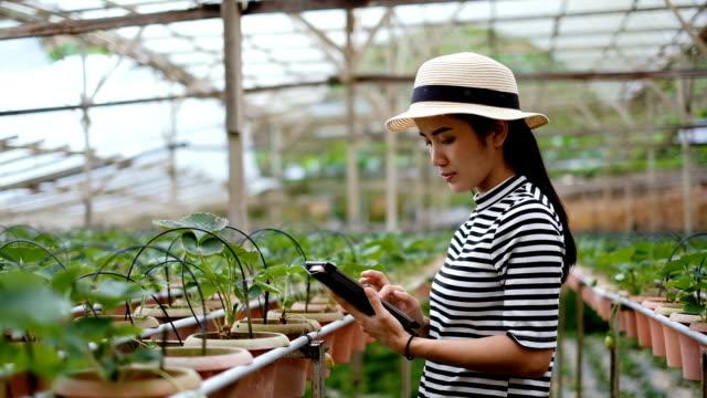 Landwirtschaft: Asiatische Frau Bauer mit A Digital Tablet In The Field, intelligente Landwirtschaft und Technologie-Konzept