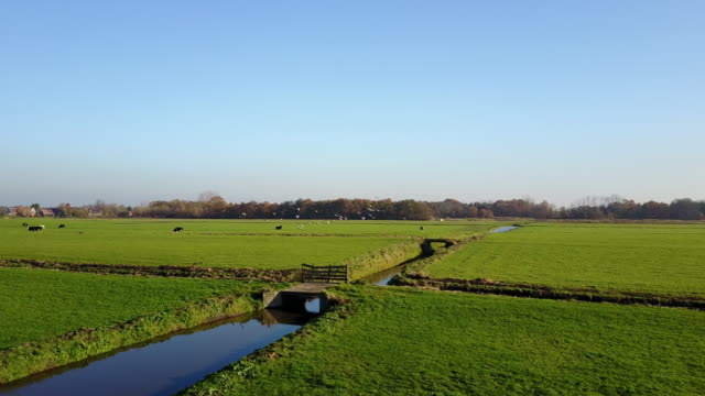 agriculture, cattle breeding on dutch farms - netherlands rural scene - canal stock videos & royalty-free footage