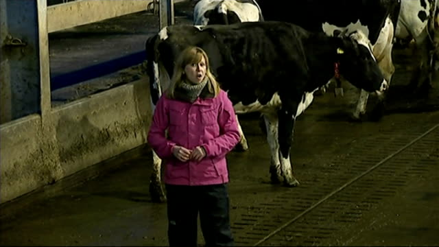 Dairy farmers payments delayed by First Milk Reporter to camera Close Shot Milking machine cluster attaching to cow Cows in milking shed Glasgow EXT...