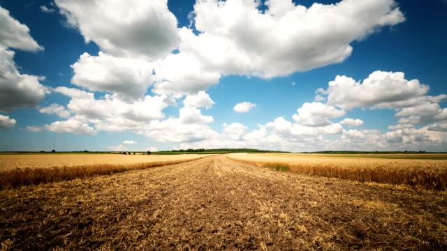landwirtschaft-feld-zeitraffer - cereal plant stock-videos und b-roll-filmmaterial