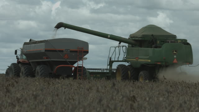stockvideo's en b-roll-footage met agriculture harvester machine on soy filed - sojaboon