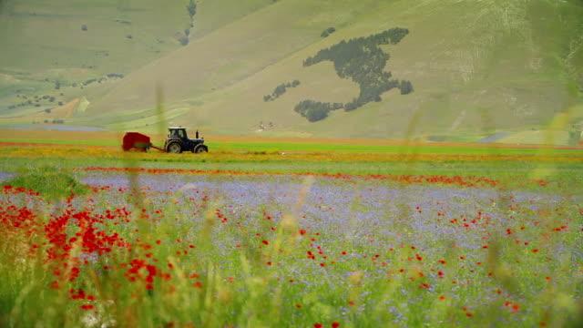 vídeos de stock, filmes e b-roll de a agricultura na itália: trator em campo - umbria