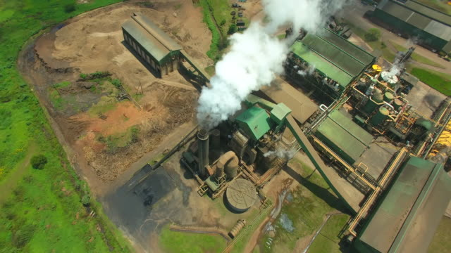 vídeos de stock, filmes e b-roll de agriculture in south africa - sugar cane