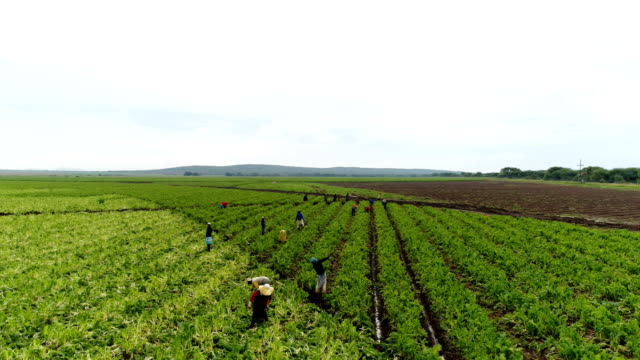 agriculture in south africa - lavoratore agricolo video stock e b–roll