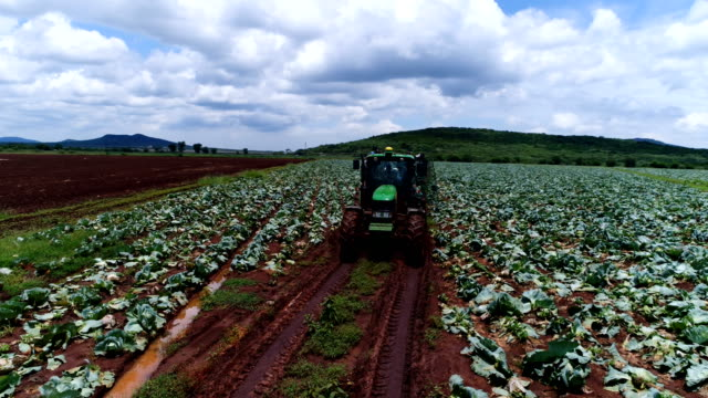 agriculture in south africa - trattore video stock e b–roll