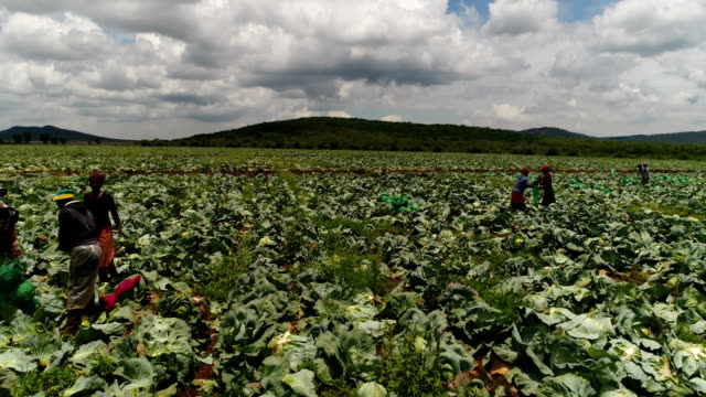 Agriculture in South Africa