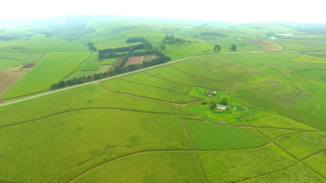 agriculture in south africa - kwazulu natal stock videos & royalty-free footage
