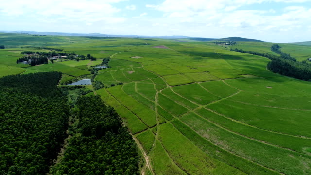 vidéos et rushes de agriculture in south africa - patchwork landscape