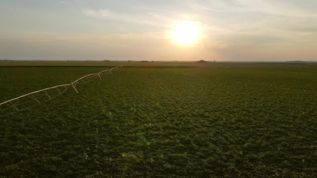 vídeos de stock, filmes e b-roll de agricultura no verão - equipamento de irrigação na terra, aspersor agrícola - soja