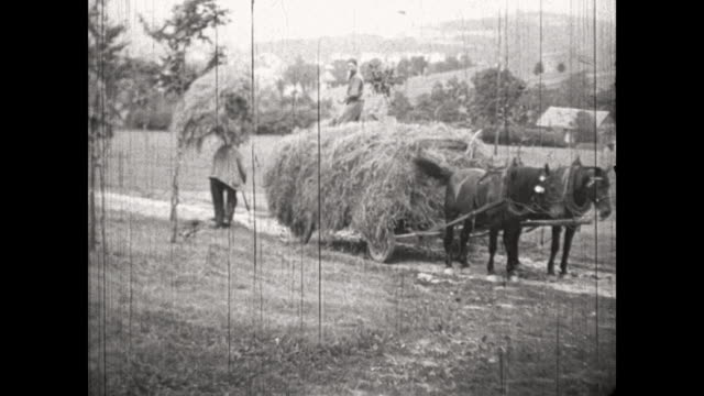 agriculture in the vogtland, saxony, cutting grass for hay, bringing the grass to horse drawn wagon / old woman, farm lady, feeding a sheep behind... - 1930 1939 stock videos & royalty-free footage