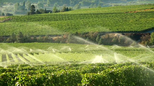 Agriculture Irrigation Sprinkler Okanagan Vineyard