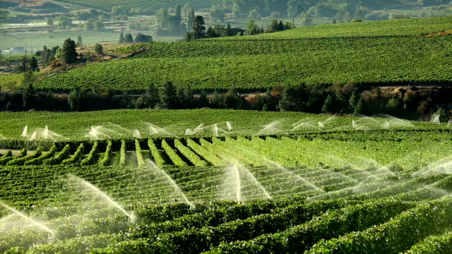 agriculture irrigation sprinkler okanagan vineyard - sprinkler system stock videos & royalty-free footage