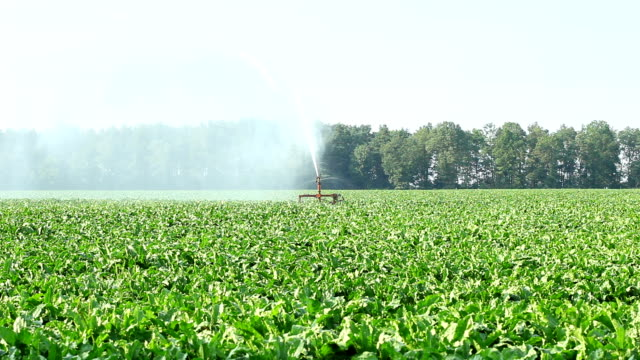 agriculture - irrigation - sprinkler stock videos & royalty-free footage