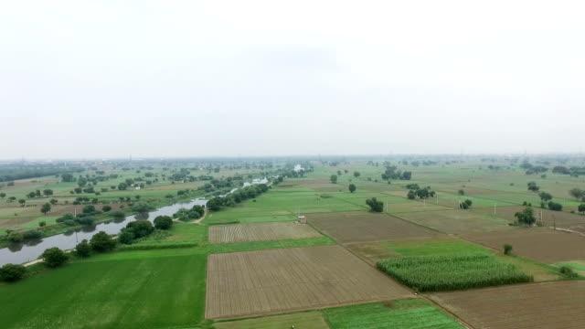 stockvideo's en b-roll-footage met landbouw grond 360 graden rotatie - sorgo