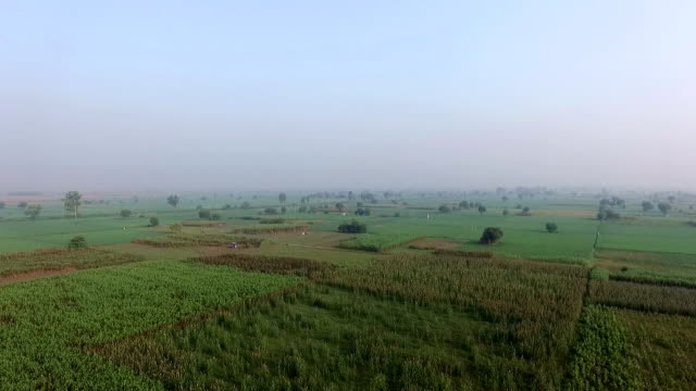 stockvideo's en b-roll-footage met landbouw grond - sorgo