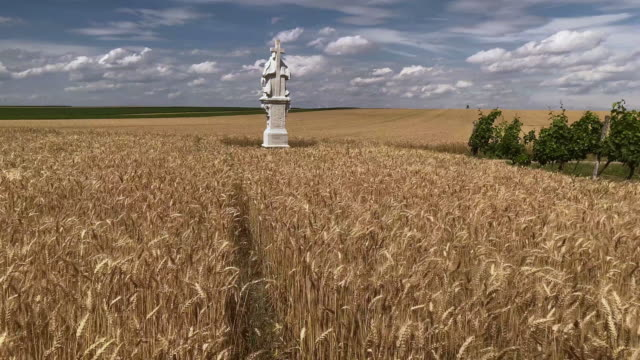 landwirtschaft landschaft getreidepflanze - cereal plant stock-videos und b-roll-filmmaterial