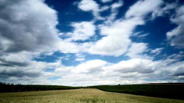 landwirtschaft-landschaft-zeitraffer - cereal plant stock-videos und b-roll-filmmaterial