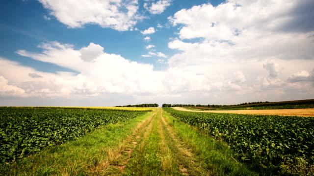 Agriculture Landscape - Time Lapse