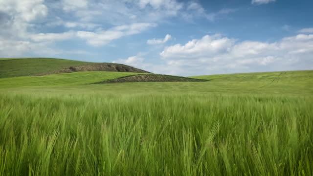 vídeos y material grabado en eventos de stock de paisaje agrícola - hierba familia de la hierba
