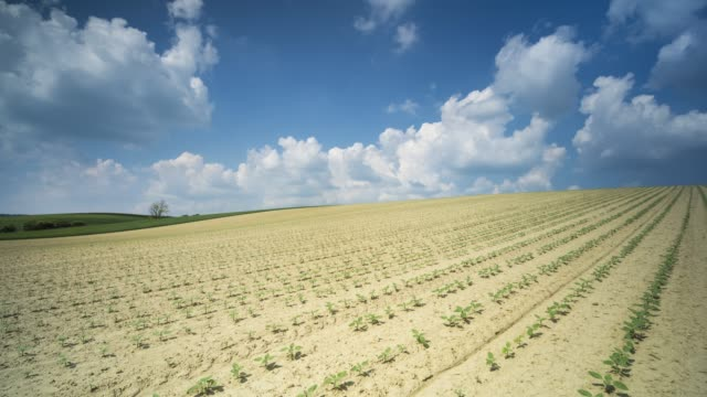 vídeos y material grabado en eventos de stock de paisaje de agricultura - austria
