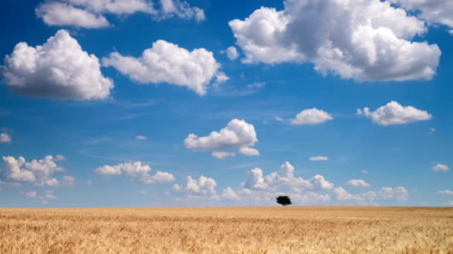 Agriculture Landscape with cumulus clouds - time lapse