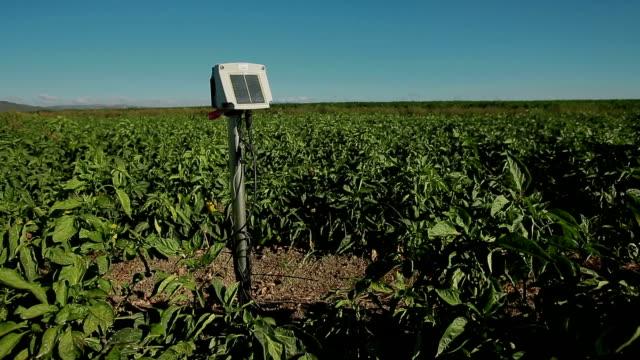 育種レガ ファーム - agricultura点の映像素材/bロール