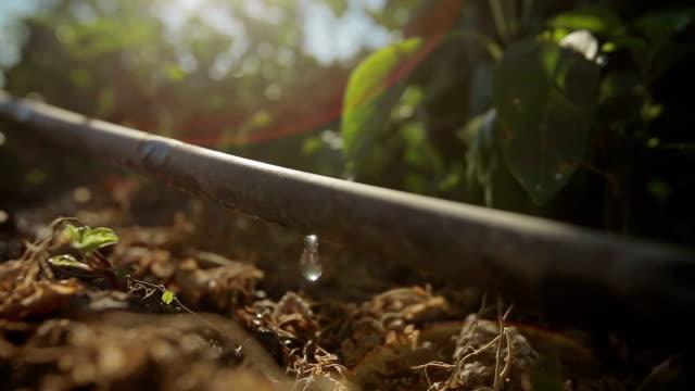 vídeos y material grabado en eventos de stock de granja de agricultura rega - equipos de riego