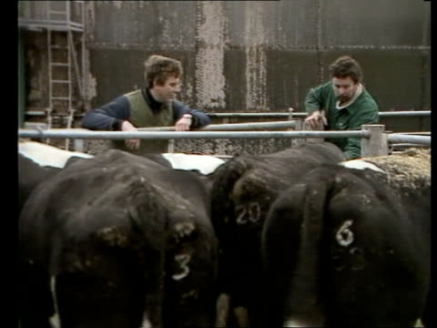 EEC Agriculture Tx 151283 Surrey Oxted MS Cows in collection yard MS Cows men looking on MS Milking parlour as cows in CS Cow's udder washed BV...