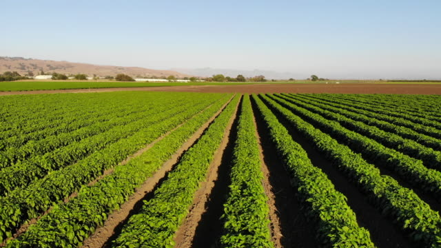 vídeos de stock e filmes b-roll de agriculture - pimentão