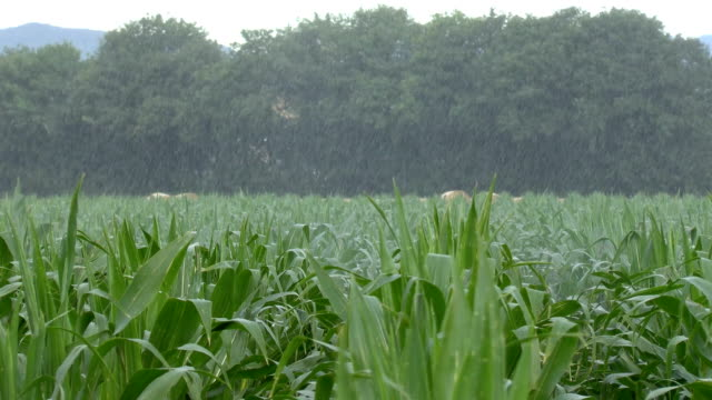 agriculture - monoculture stock videos & royalty-free footage